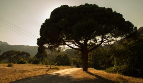 Дорога к Химере